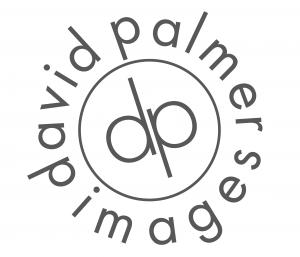 DavidPalmer-01